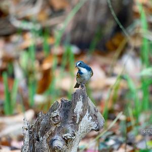 青い鳥たち