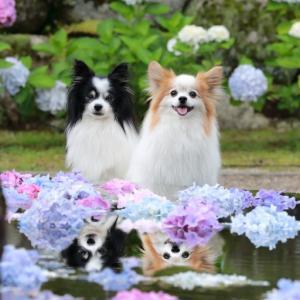 久安寺の池の水面を利用し。。。