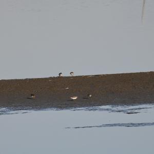 伊佐沼の水鳥