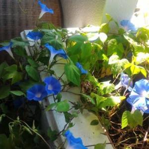秋?夏の花