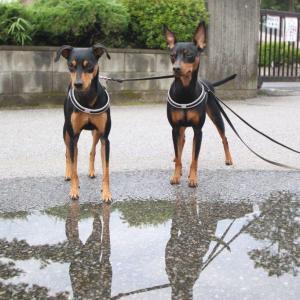梅雨のヨミ!