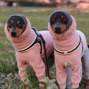 寒はもういいぞ。