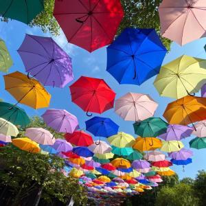 雨降らないけど傘な日曜日。