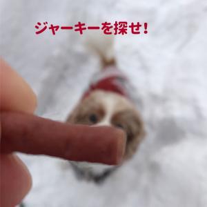 ちびキャバ風*冬の楽しみ