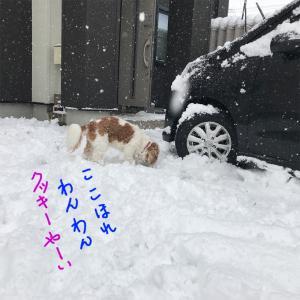 雪が積もったね