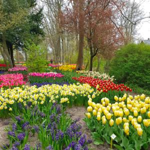 まるでキューケンホフ公園!?入場無料の花庭園