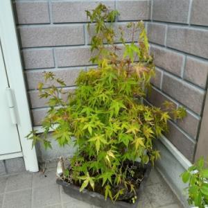 植物を育てる才能は無いのかも 好きなのになぁ