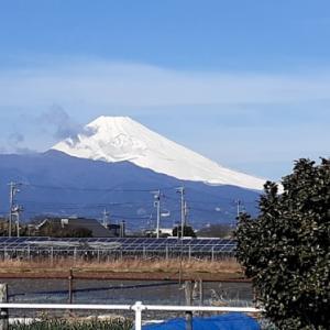 久しぶりの散歩と富士山