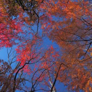 紅葉の下で思いを寄せる