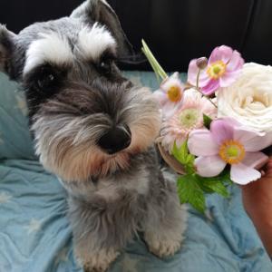ルークとアネラの誕生花