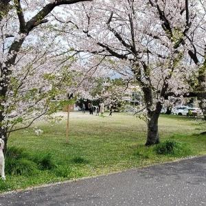そろそろ桜も終わりですね