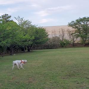 運動公園で簡略に済ませました。