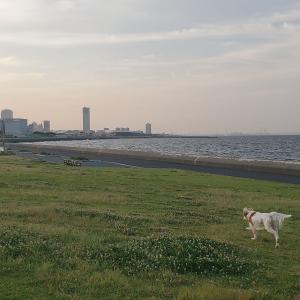 茜浜公園散歩と、市民相談