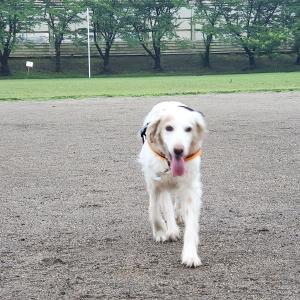 昨日と今日の公園散歩