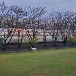 雨が止んだ日曜日は稲毛公園