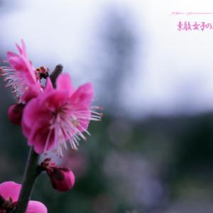 花梅 ('-'*)♪