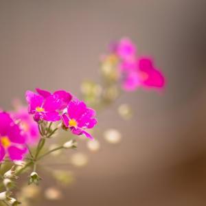 病気を治したいときにも、勇気を出して思考と向き合ってみよう。