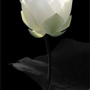 心に、魂に、潜在意識に、インナーチャイルドに光を