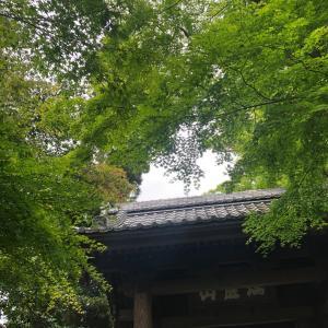 19、20の光の瞑想会は湘南サロンでの開催です