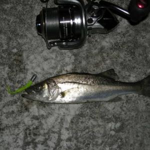 今釣れる魚 ベスト3