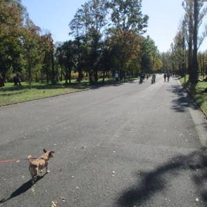 寒くなる前にアズキ公園