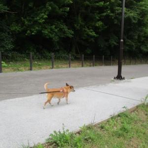 やっぱりお散歩が一番好き。