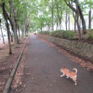 アズキのワイルド散歩