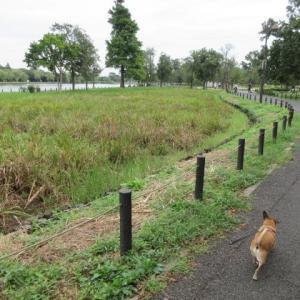 公園散歩・つづき