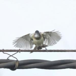 2/07  1月上旬に出会った鳥達②