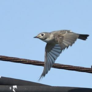 11/04  10月上旬に出会った鳥達①