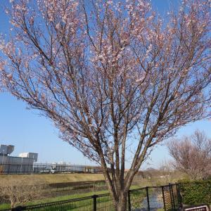 2021年桜の開花