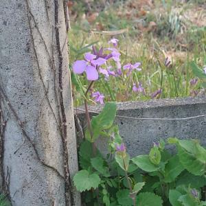 春に咲く植物たち