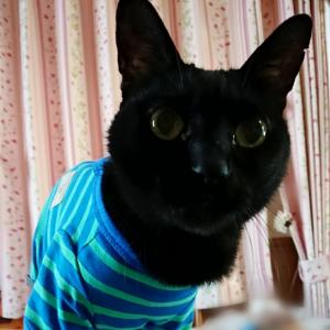 1961.訃報…と猫ホイホイ