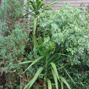 2266.植物と大好きな紐♪