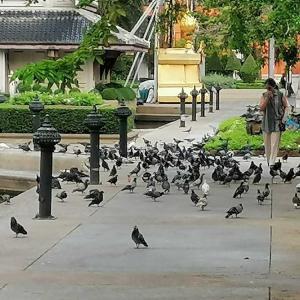バンコク朝の散歩・・・17,000歩を体感