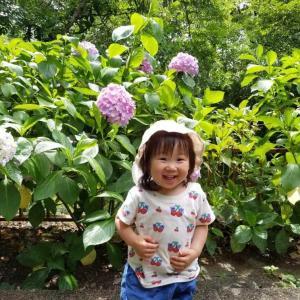 紫陽花が似合う梅雨だけど、バンコクで秋刀魚定食。