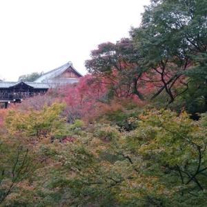 東福寺の紅葉はきれいでした|タモリCMで有名なアレ