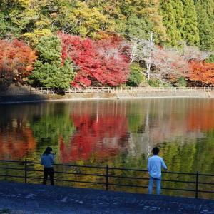 伊自良湖の紅葉