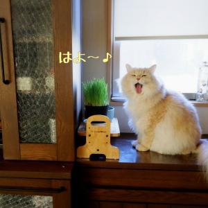猫とリボン