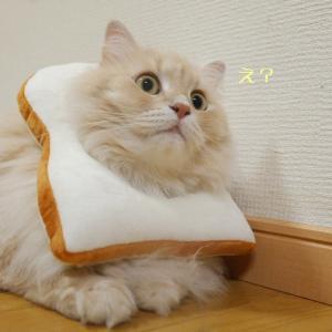 食パンなぽぽたん