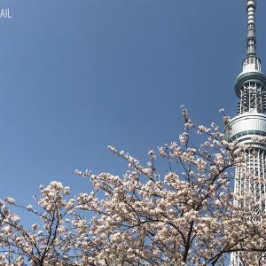 平成最後の桜とHAPPY STAND!