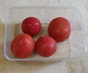 トマトの保存容器買ってきた