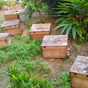 養蜂日誌/037 養蜂場の引っ越し