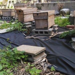 養蜂日誌/038 養蜂2020