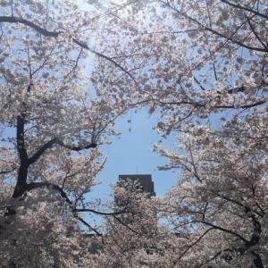 ピンクのジーンズ〜 先輩 志村けんさん追悼