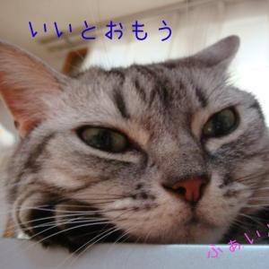 ますかっとやま  〜京都HUKUNAGA901〜