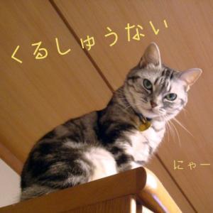 猫のしもべ
