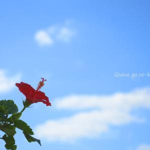 沖縄っぽい写真10枚-沖縄旅行をキャンセルしたので遠い目で眺めてる