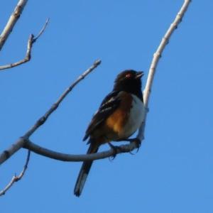 小枝でさえずる小鳥