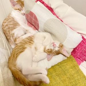 ニャンズ(猫たち)が『福』を呼ぶ♪